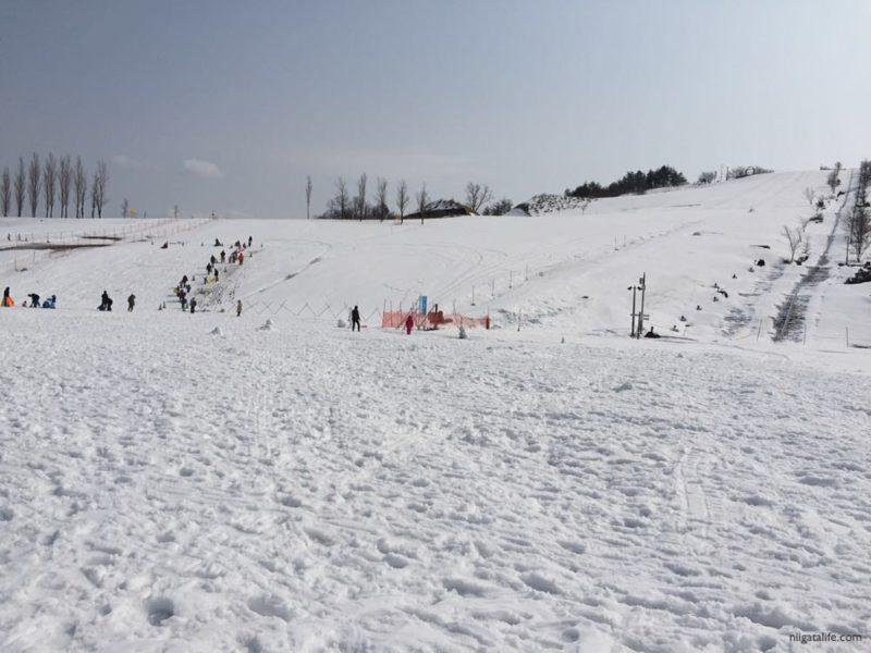 今シーズン最後のホワイトシーズン!丘陵公園へ行きました