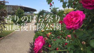 越後丘陵公園で開催中の「香りのばらまつり」へ!気になる咲き具合は?5月28日は入園無料!