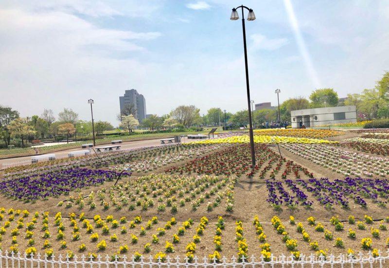 千秋が原ふるさとの森 花の広場」花壇全体が見渡せるスカイウェーは ...