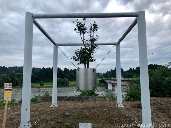 妻有で育つ木