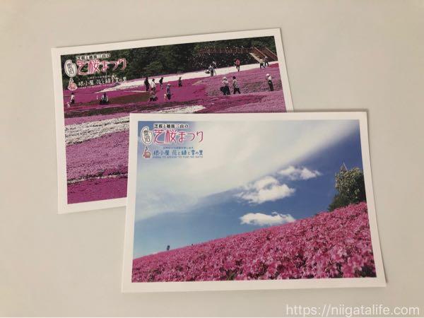 魚沼芝桜まつり!ピンクの花々と香りに包まれて