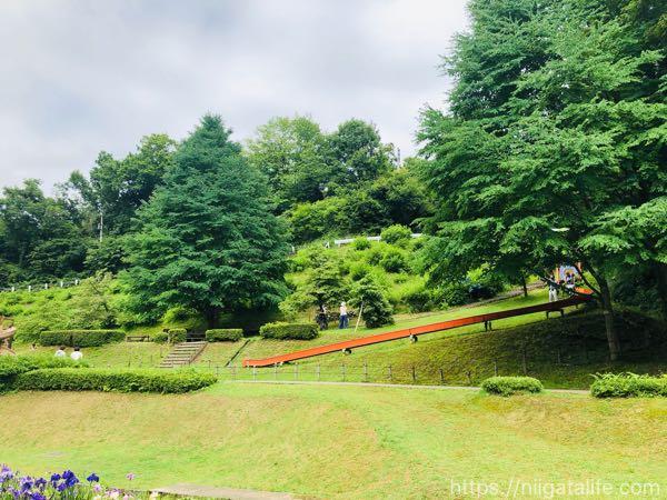 「花菖蒲まつり」見頃で満開!しらさぎ森林公園へ
