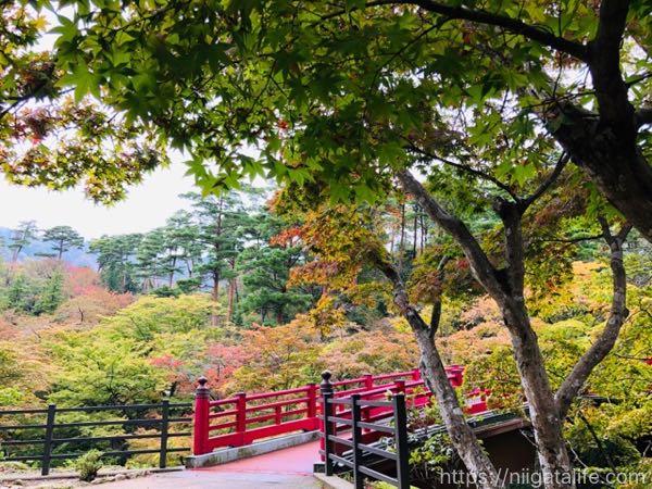 【紅葉スポット】弥彦公園もみじ谷の10月27日の様子