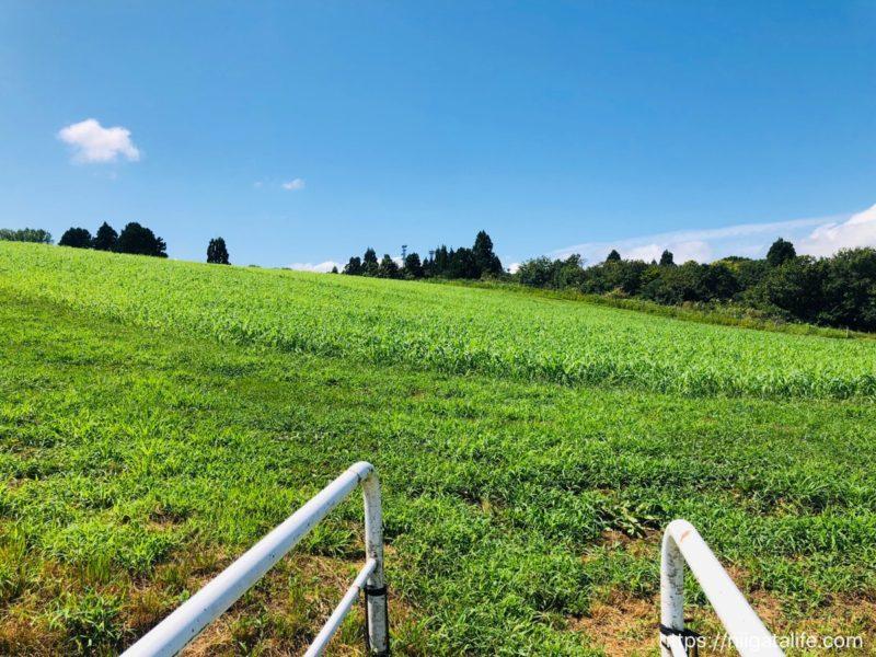 小千谷の夏の終わりの風景