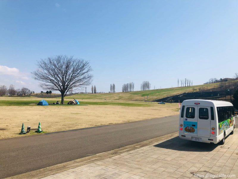 丘陵公園 雪割草 2021