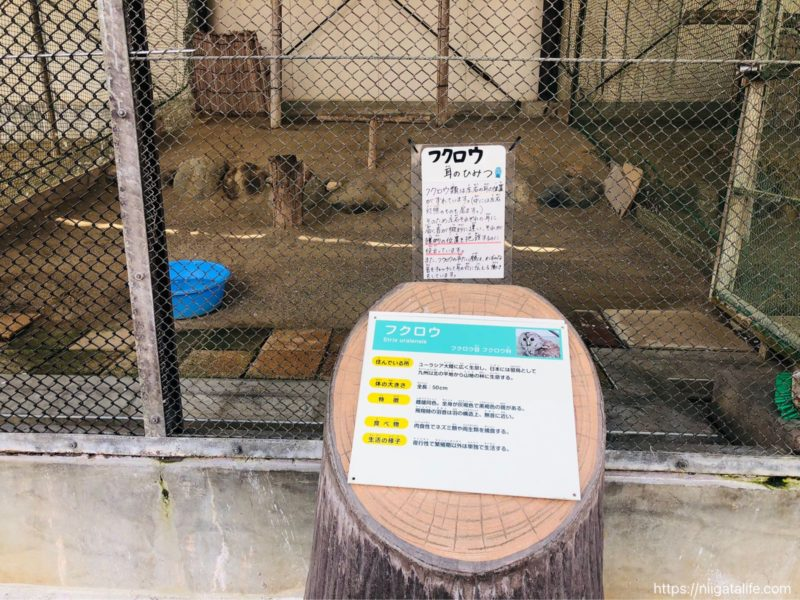 悠久山小動物園にアルパカが♡猿山の小猿など見どころ満載!
