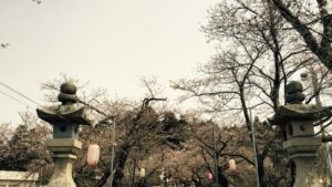 悠久山桜まつり開催中!おいしいもの広場の日程と駐車場の案内